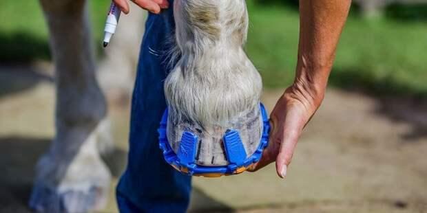 12. Обувка для лошадей, которая бережёт суставы животного. Она заменяет собой стальные подковы и её легко снять в мире, гениально, изобретения, на заметку, удобно, хитрости