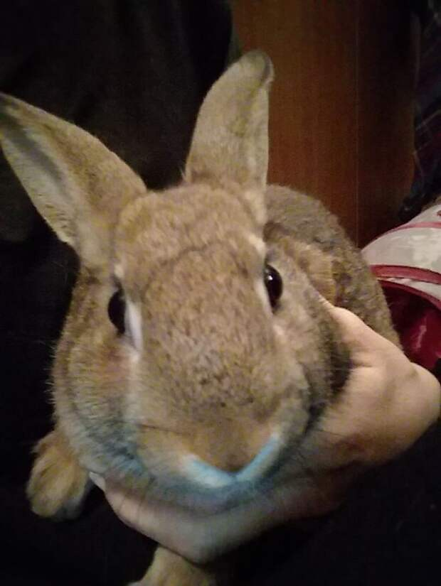 Принеся в дом кролика, семья и представить себе не могла, что их ждет подарочек от милого пушистика
