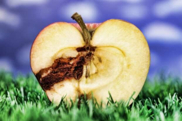 Можно ли есть червивые яблоки и другие фрукты?