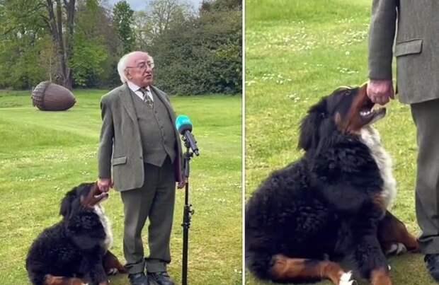 Собака президента Ирландии пыталась играть с хозяином во время интервью