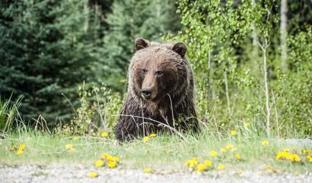«Разодрал сиденья, помял крышу»: медведь повредил машину впоисках еды вКарелии
