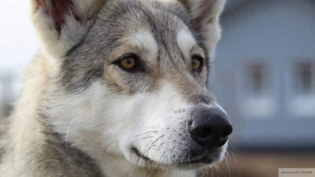 Житель Мордовии подобрал на дороге раненую собаку и выходил ее