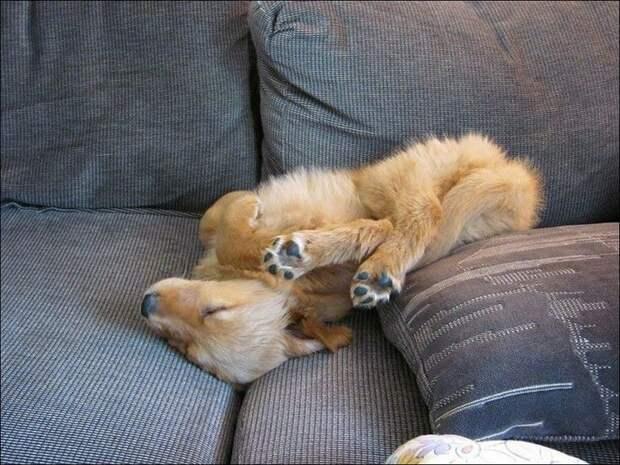 Спят усатые зверушки) Позитивные фото спящих животных, которые поднимут вам настроение!