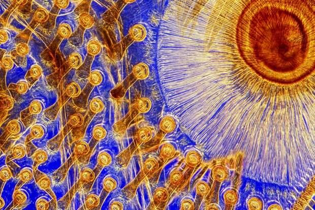 9 кислотных фото цветов, животных и других вещей под микроскопом