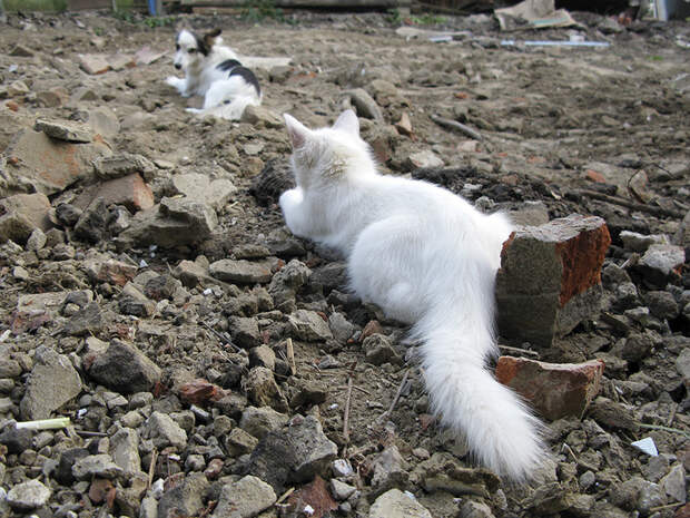 «Она носила шишки и делала массаж…» Как цыганская кошка-полукровка сумела организовать «переселение душ»)