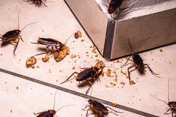 В подъезде дома на Пестеля уничтожили всех тараканов