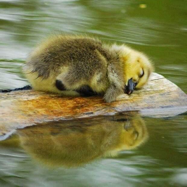 Как мило! 10+ детенышей животных, которые не дадут вам грустить