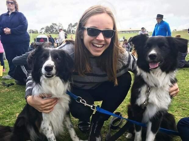 576 бордер-колли собрались в одном месте, чтобы побить мировой рекорд Порода, австралия, бордер-колли, животные, мероприятие, рекорд, собака