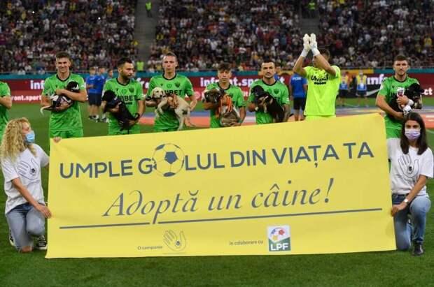 Футболисты из Румынии вышли на поле перед матчем с щенками в руках