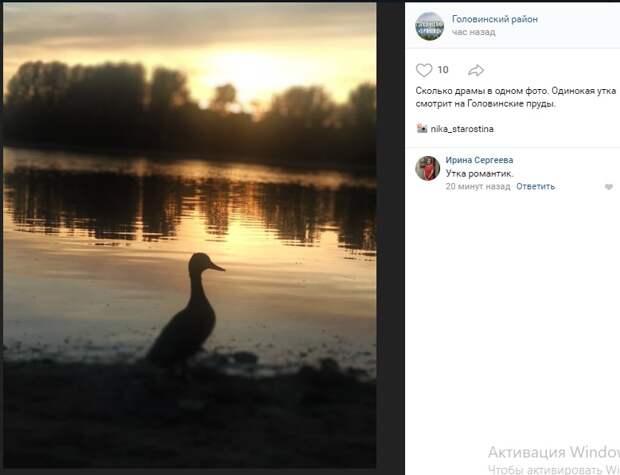 Фото дня: утиный силуэт на Головинских прудах