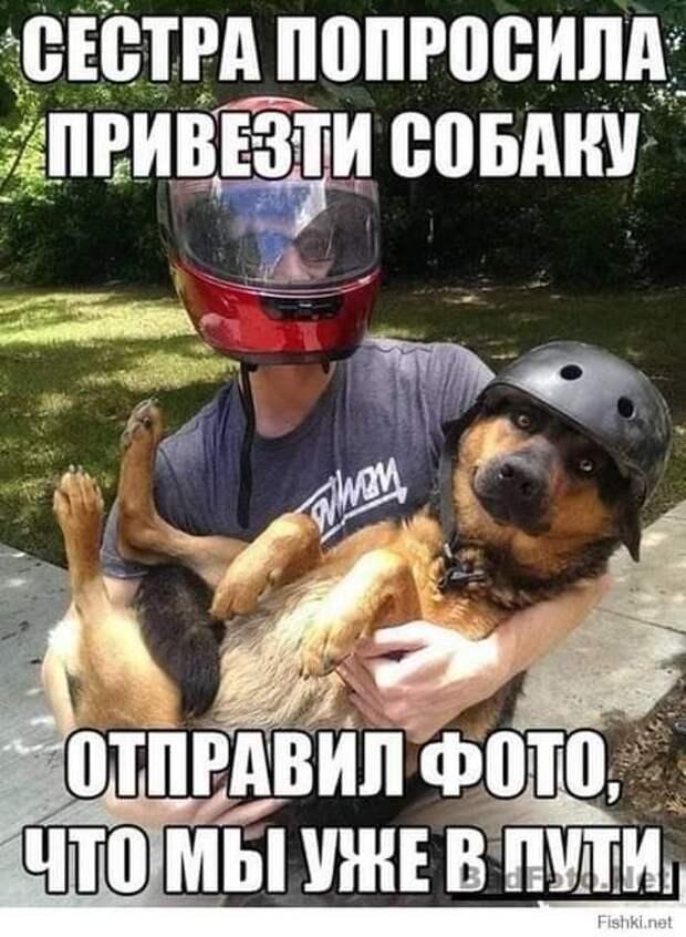 Возможно, это изображение (2 человека и текст «сестра попросила привезти собаку WMOM отправил фото, что мы уже в пути. Fishki.net»)