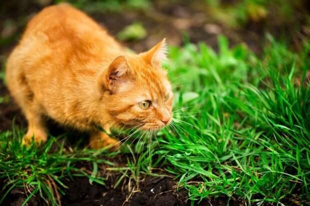 Отпугивание кошек апельсиновыми корками