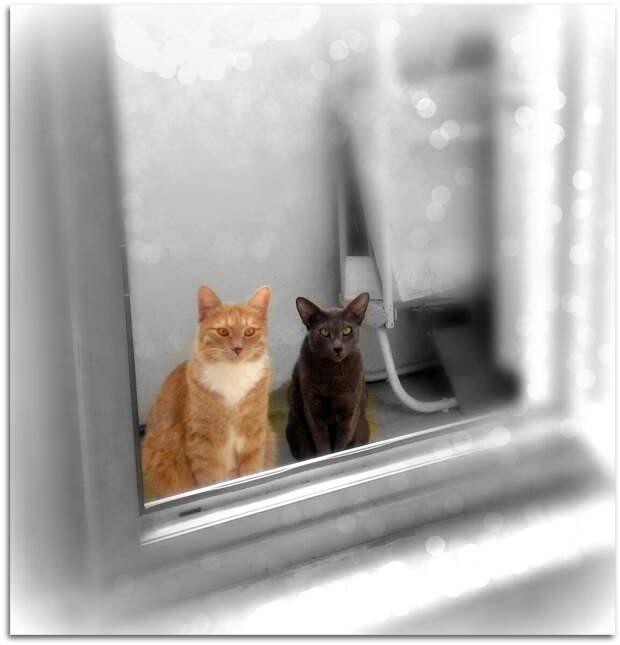 Кира и Тиша очень любят друг друга. Но когда я глажу Тишу Кира всегда прибегает и даже иногда пытается его укусить. Также она защищает свое место на диване, если на него хочет лечь другая кошка.