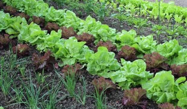 Посадите свои овощи по новому. И результат вас порадует