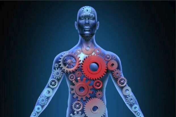 Необязательные запчасти: 5 органов, без которых мы можем обойтись