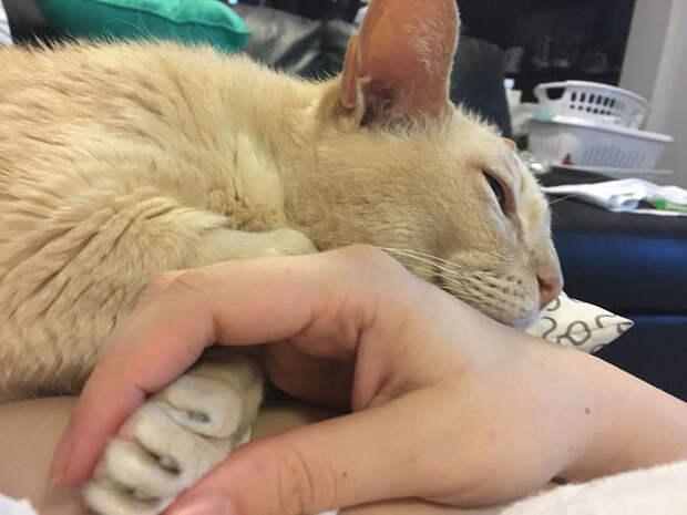 Старенький котик не может заснуть, если хозяйка не держит его за лапку