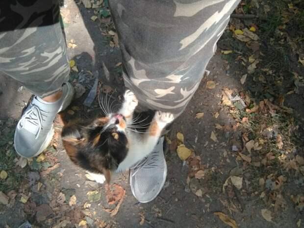 Котенок выпрыгнул из кустов и тут же бросился обнимать наши ноги, его колотило от страха, но упускать свой шанс он не хотел
