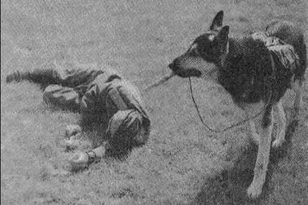 Верные псы войны. Подвиг 150 пограничных собак