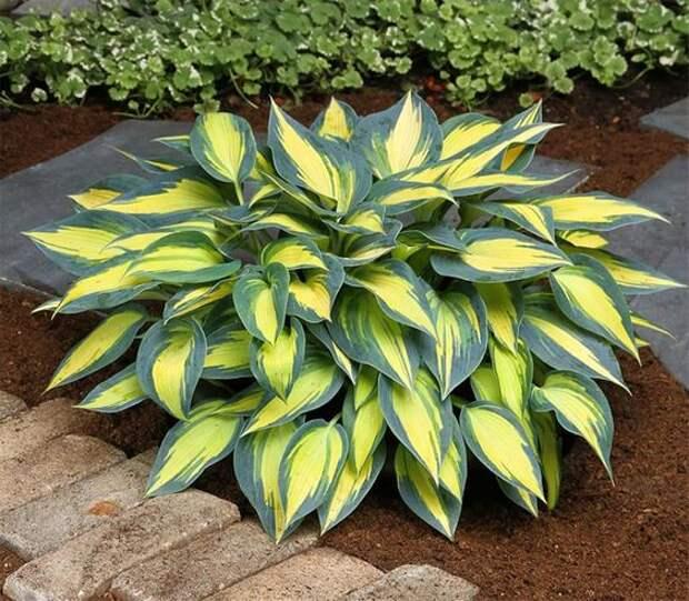 12 очень красивых и неприхотливых растений для вашего сада