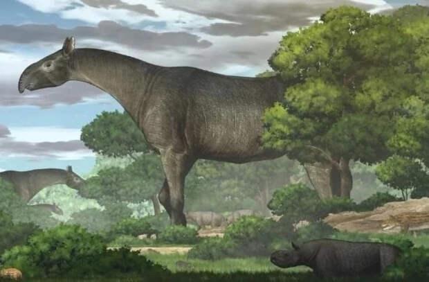 В Китае обнаружен новый вид доисторического гигантского носорога