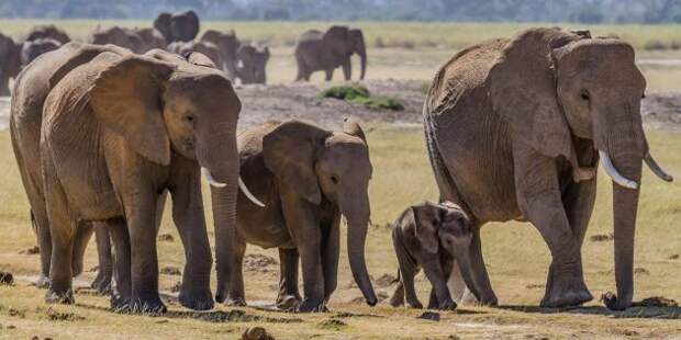 10 заблуждений о животных, которые мы усвоили ещё в детстве