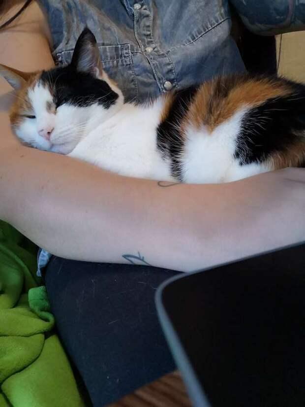Благодарная кошка не слезает с ручек и не даёт хозяевам нормально работать