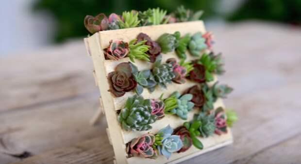 Она научилась делать настольные мини-сады — паллеты суккулентов