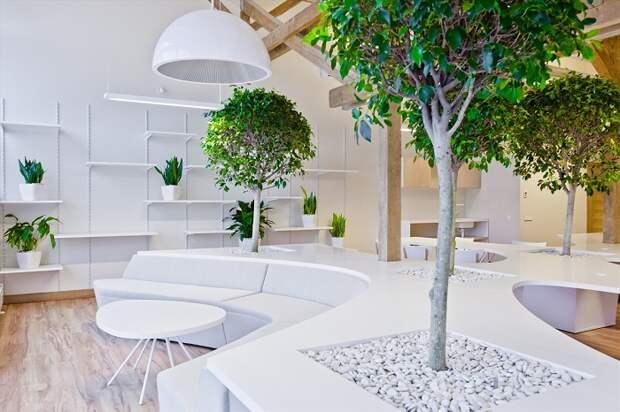 Неприхотливые комнатные цветы и небольшие деревья не доставят много хлопот и станут достойным украшением интерьера.