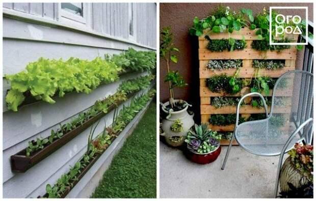 Как распланировать огород на маленьком участке