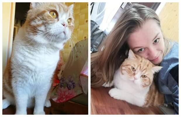 «Хозяева продали своего кота закопейки: просто вынесли наулицу, вдождь, без переноски, без личных вещей»