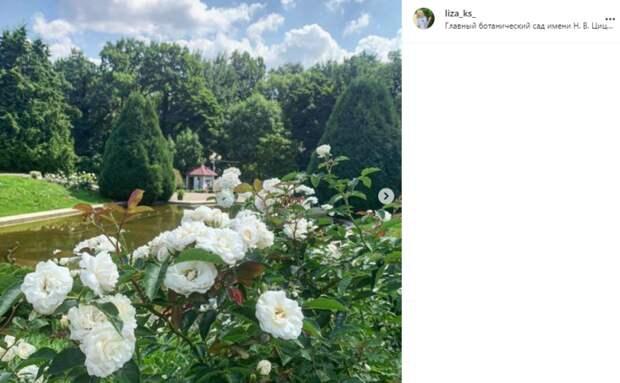 Фото дня: в Ботаническом саду распустились розы