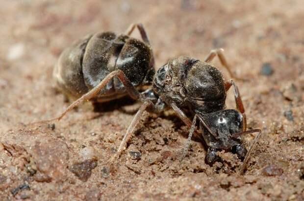 Кипяток, чеснок и мел. Как бороться с муравьями без химии?