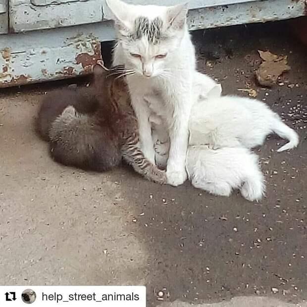 Помогите кошечке-красавице с котятами!!