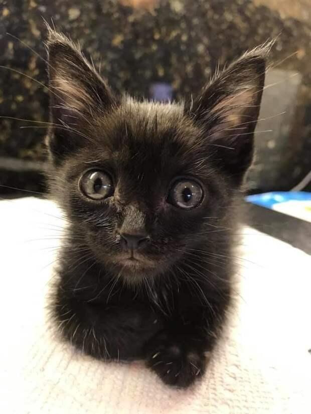 Обмякший котенок лежал на дороге, но крошечное сердечко еще билось история, история спасения, коты, котята, кошки, спасение животных