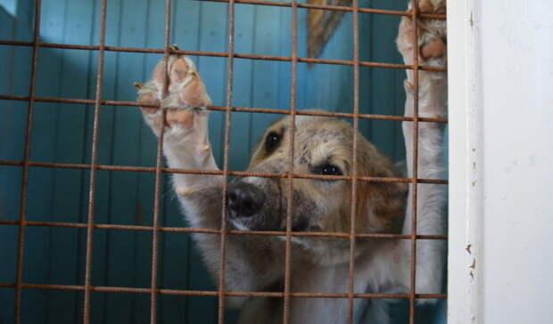 Сеть приютов для бродячих собак появится вСвердловской области