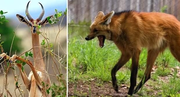23 несуразных зверька, в чье существование сложно поверить животные, природа, странности