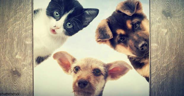 Психологи подтвердили: животные знают, когда их хозяева нуждаются в поддержке