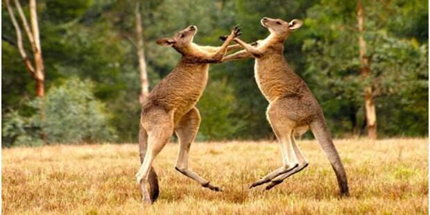 Австралия вошла в роль и начала пугать Китай