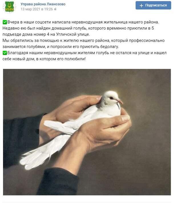 В Лианозове спасли раненого голубя