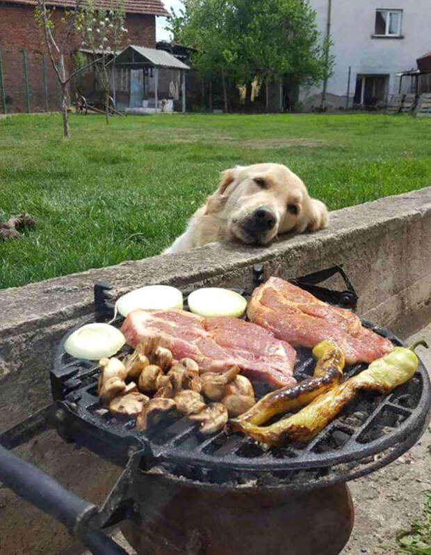 Собачки, которые готовы на все, чтобы утолить свой голод