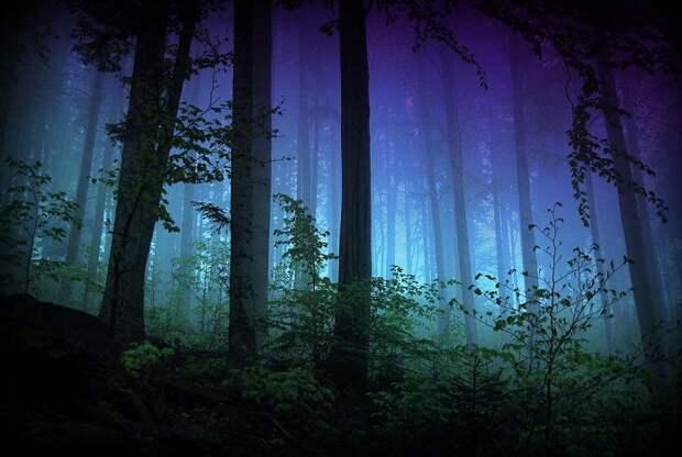 Как долго вы продержитесь, заблудившись ночью в лесу?