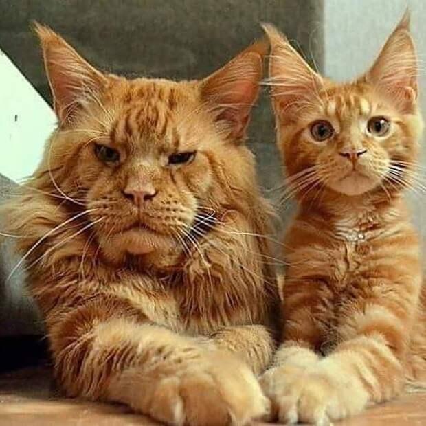 Сынок, я научу тебя всему кот, коты, опасный кот, прикол, суровый