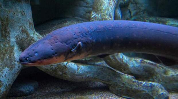 Биология вещь интересная, как и эволюция. /Фото: fb.ru.