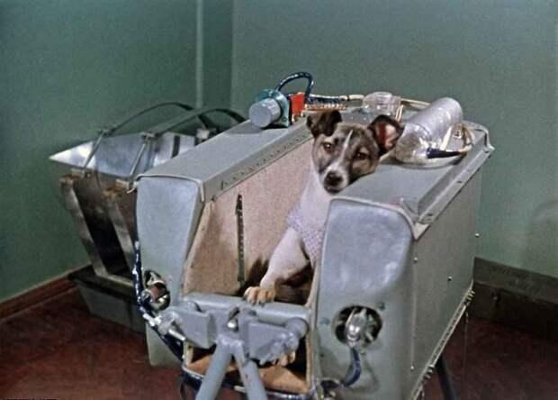 Почему именно Лайка? «Спутник-2», день в истории, космос, собака Лайка