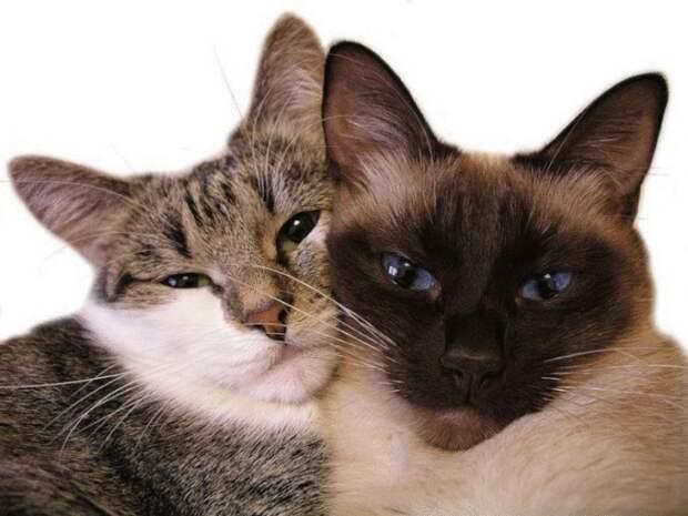 Опять не выспался, бедняга? 7 способов отучить кошку будить тебя ночью