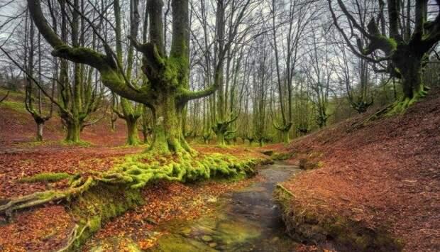 Горбеа — испанский лес, окутанный тайнами и мистикой