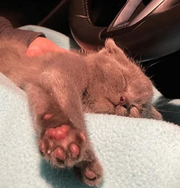 Крохотный котенок «плакал» в укрытии на ферме. Малышке было очень страшно оставаться в одиночестве