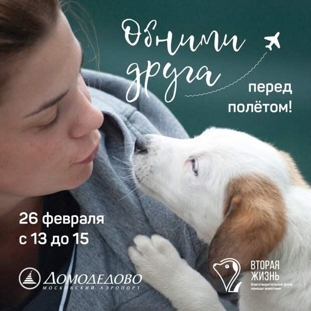 В Домодедово собаки помогли пассажирам снять стресс перед полетом Аэрофобия, авиа, акция, добро, домодедово, животные, москва, обними друга перед полетом, собаки