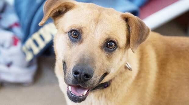 Пёс не доверял людям, так как не видел от них ничего хорошего, но в один прекрасный день он превратился в добряка