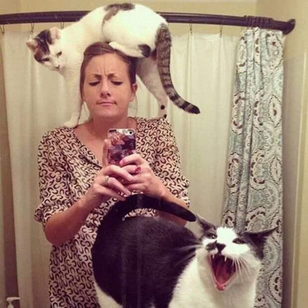 Эти вещи знакомы всем владельцам котов